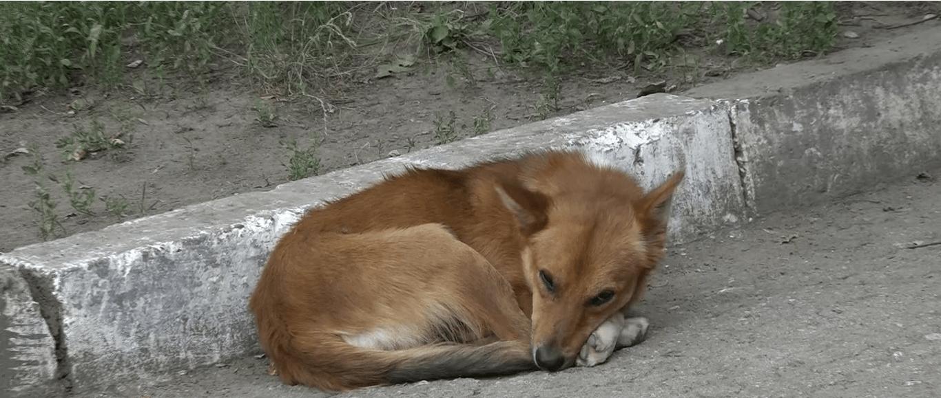 impozit pentru câini și pisici