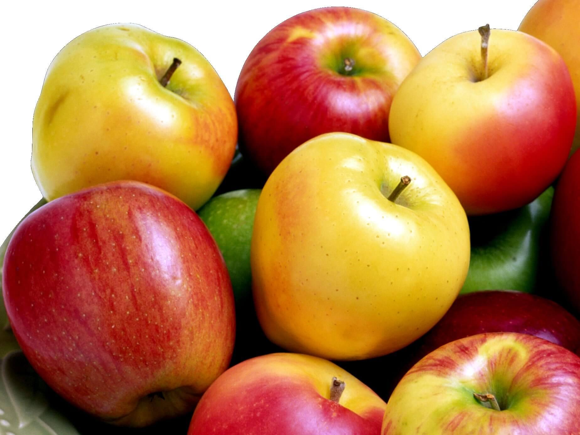 яблоки для школьников